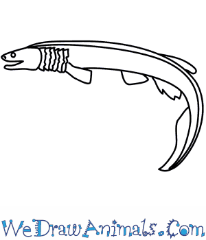 How to Draw a Frilled Shark in 10 Easy Steps