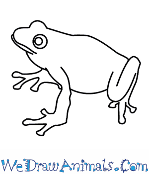 How to Draw a Frog in 7 Easy Steps