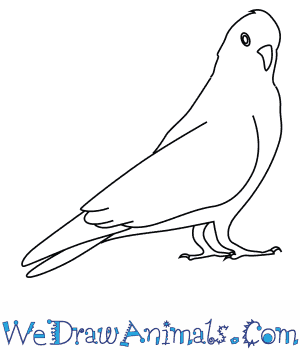 How to Draw a Galah in 7 Easy Steps