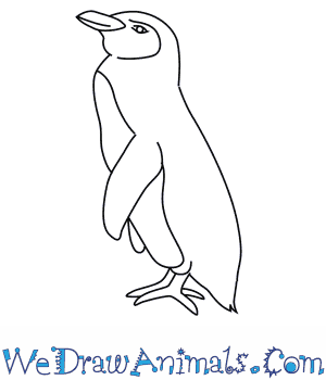 How to Draw a Galapagos Penguin in 7 Easy Steps