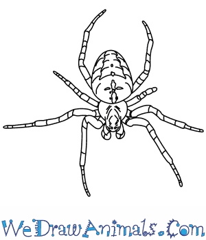 How to Draw a Garden Spider in 5 Easy Steps