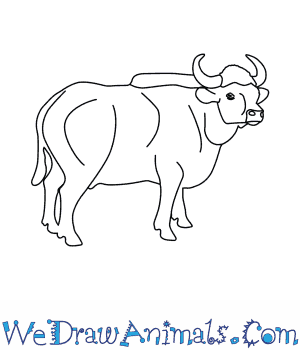 How to Draw a Gaur in 6 Easy Steps