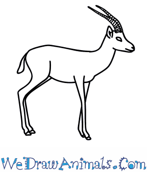 How to Draw a Gazelle in 11 Easy Steps
