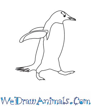 How to Draw a Gentoo Penguin in 6 Easy Steps
