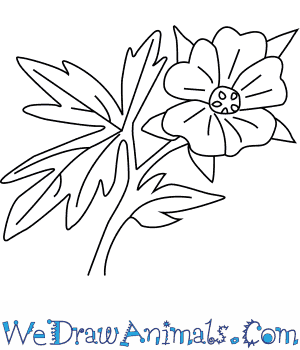 How to Draw a Geranium Flower in 4 Easy Steps