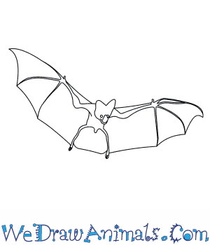How to Draw a Ghost Bat in 6 Easy Steps
