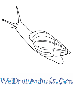 How to Draw a Giant African Snail in 5 Easy Steps