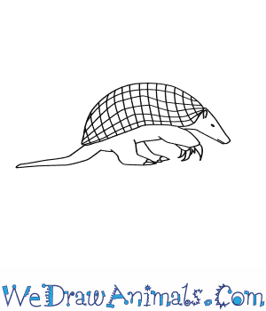 How to Draw a Giant Armadillo in 9 Easy Steps