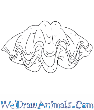 How to Draw a Giant Clam in 3 Easy Steps