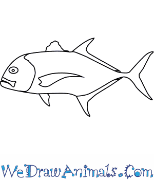 How to Draw a Giant Trevally in 5 Easy Steps