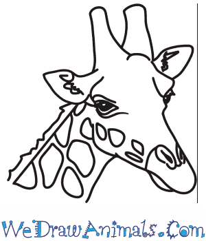 How to Draw a Giraffe Head in 7 Easy Steps