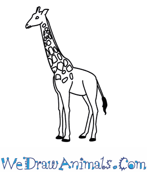 How to Draw a Giraffe in 9 Easy Steps