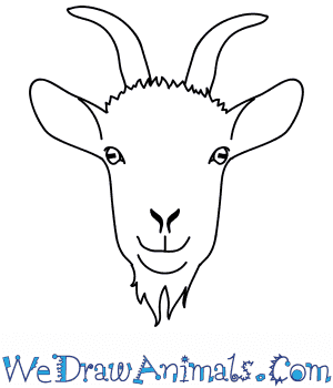 How to Draw a Goat Face in 8 Easy Steps