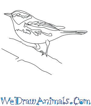 How to Draw a Golden Cheeked Warbler in 6 Easy Steps