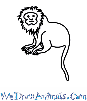 How to Draw a Golden Lion Tamarin in 7 Easy Steps