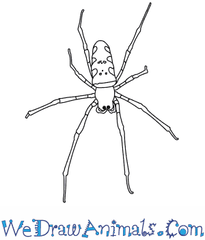 How to Draw a Golden Orb Spider in 7 Easy Steps