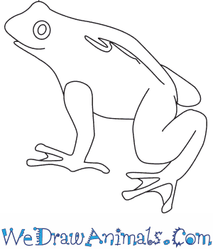 How to Draw a Golden Toad in 5 Easy Steps