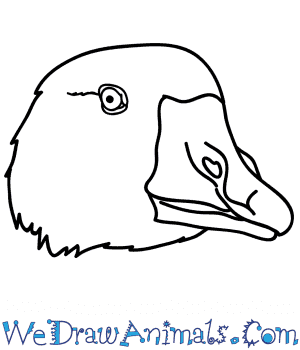 How to Draw a Goose Face in 5 Easy Steps