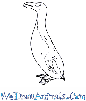 How to Draw a Great Auk in 9 Easy Steps