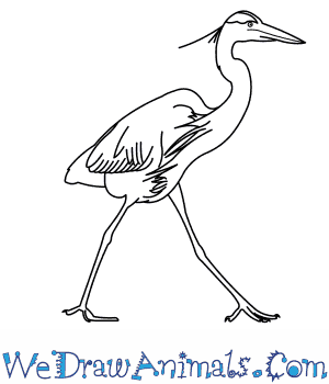 How to Draw a Great Blue Heron in 9 Easy Steps