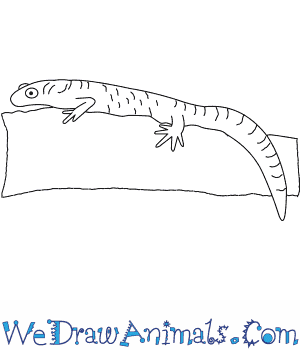 How to Draw a Great Crested Newt in 8 Easy Steps