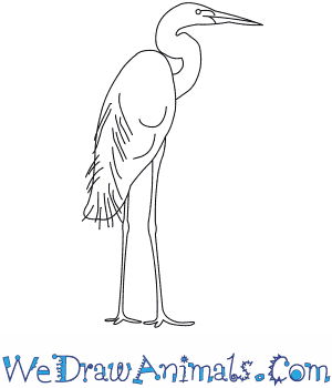 How to Draw a Great Egret in 8 Easy Steps