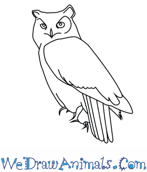 How to Draw a Great Horned Owl in 7 Easy Steps