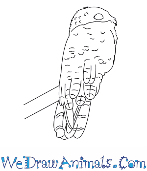 How to Draw a Great Potoo in 6 Easy Steps
