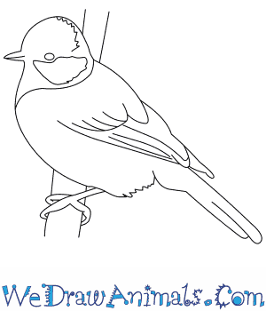 How to Draw a Great Tit in 7 Easy Steps