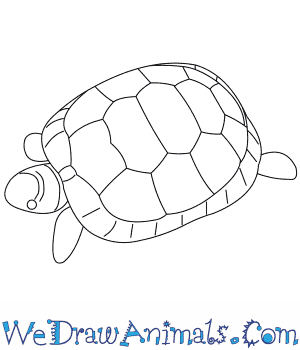 How to Draw a Greek Tortoise in 7 Easy Steps
