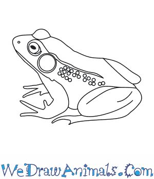 How to Draw a Green Frog in 6 Easy Steps