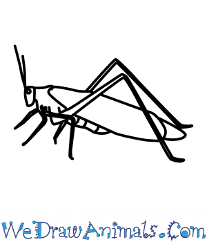 How to Draw a Green Grasshopper in 7 Easy Steps