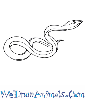 How to Draw a Green Vine Snake in 4 Easy Steps