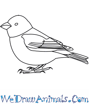 How to Draw a Greenfinch in 6 Easy Steps