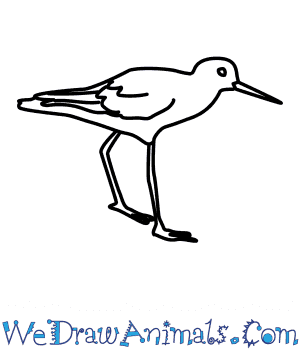 How to Draw a Greenshank in 5 Easy Steps