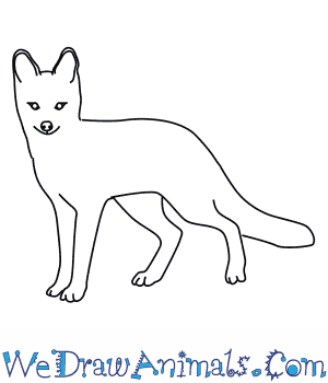 How To Draw A Grey Fox