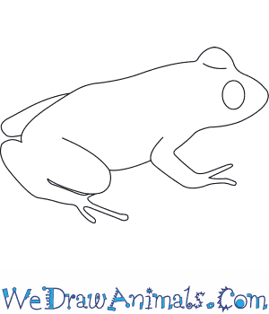 How to Draw a Greys Robber Frog in 5 Easy Steps