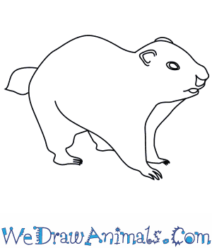 How to Draw a Groundhog in 8 Easy Steps
