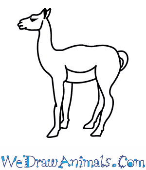 How to Draw a Guanaco in 8 Easy Steps