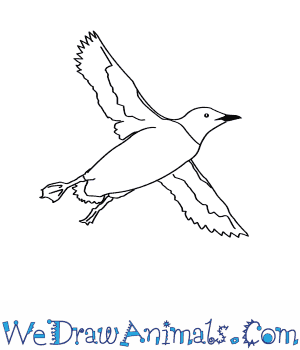 How to Draw a Guillemot in 7 Easy Steps
