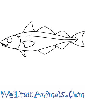 How to Draw a Haddock in 7 Easy Steps