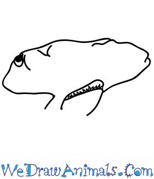 How to Draw a Hammerhead Shark Face in 5 Easy Steps