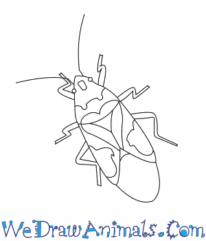 How to Draw a Harlequin Bug in 6 Easy Steps