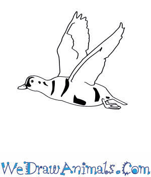 How to Draw a Harlequin Duck in 7 Easy Steps