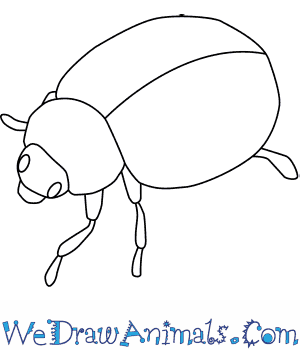 How to Draw a Harlequin Ladybird in 5 Easy Steps