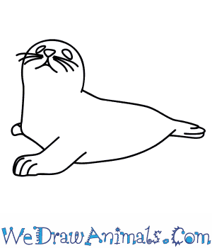 How to Draw a Harp Seal in 6 Easy Steps