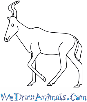How to Draw a Hartebeest in 7 Easy Steps