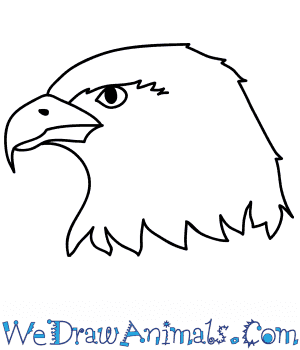 How to Draw a Hawk Face in 7 Easy Steps