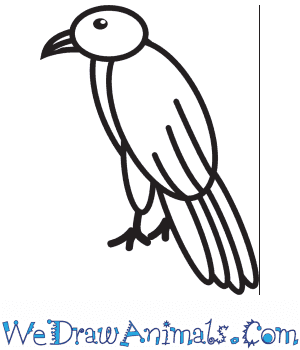 How to Draw a Hawk For Kids in 8 Easy Steps