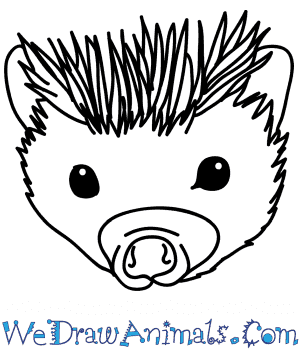 How to Draw a Hedgehog Face in 5 Easy Steps